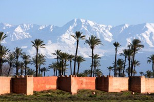 Marrakech - Palm Trees - Snow